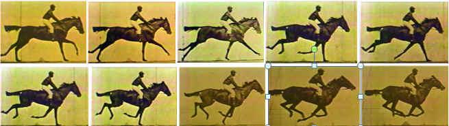 Multiple-horse-gat.jpg
